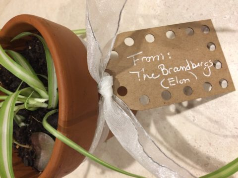 Add a label to a plant to create a fun housewarming gift, or gift for a teacher! Add care instructions, or details on the plants meaning.